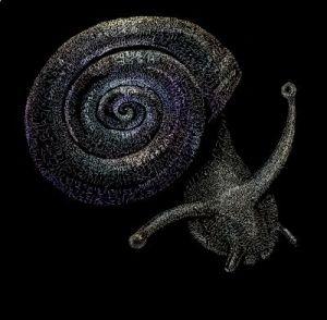 fibonaccis-snail-co